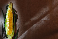 One indian corn ear on gray linen canvas Royalty Free Stock Photo