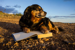 One intelligent Black Dog Reading a Book Royalty Free Stock Photo