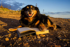 One intelligent Black Dog Reading a Book Stock Images