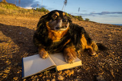 One intelligent Black Dog Reading a Book Royalty Free Stock Photos