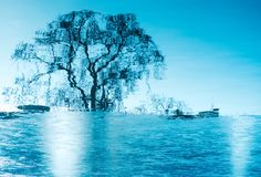 Amazing winter reflections on a frozen lake. One isolated big tree reflects its silhouette on the blue surface of a half frozen lake in day light royalty free stock images