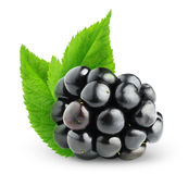 One isolated blackberry with leaves stock photography