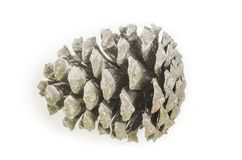 One isolated pine-cone Stock Images