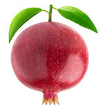 One isolated pomegranate with leaves stock image