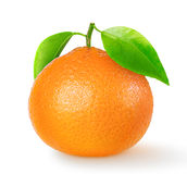 One isolated tangerine Royalty Free Stock Image