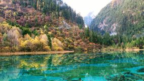 One of Jiuzhaigou's many lakes reflecting the colourful fall foliage on a calm afternoon in Jiuzhaigou Valley National Park. royalty free stock photos