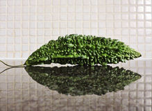 One karela, the bitter cucumber. Royalty Free Stock Images