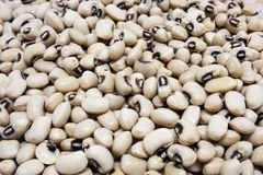 White beans. One kind of white beans Stock Image