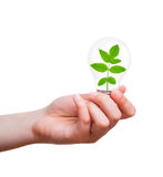 One lamp with plant inside in human hand Royalty Free Stock Photos