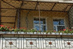 Large balcony with iron grill with flowerpots and decorative flowers stock photos