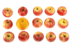One large orange and red apples Stock Image