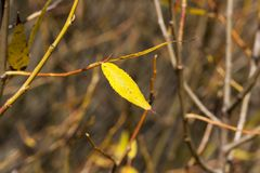last leaves royalty free stock photography