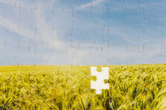 One last piece required to complete the puzzle. In a landscape jigsaw depicting a sunlit field or ripening golden wheat with one piece missing in the centre in royalty free stock photo