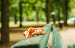 One leaf fallen. On a bench as a symbol of incoming  autumn Stock Photos