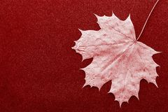 One leaf maple closeup on a dark background. One foliage maple as the isolated object closeup on a dark background stock photos