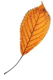 One leaf over white Stock Images