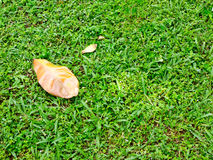 One leaves on the lawn Stock Photo