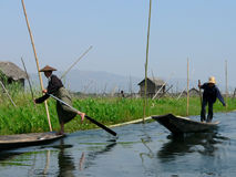 One Leg Boat Rower. In Floating Fields, Inle Lake, Shan State, Myanmar (Burma stock image