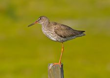 One-legged bird on pole Royalty Free Stock Photo