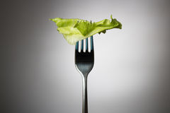 One lettuce leaf on a vertical fork Royalty Free Stock Photos