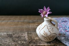 One lilac flower Xeranthemum on clay vase on wooden texture back royalty free stock image