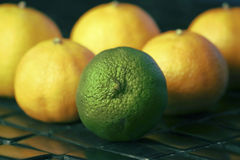 One Lime Among Group Of Lemons Stock Images