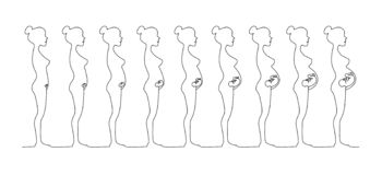 One line pregnant female silhouettes. Changes in a woman`s body in pregnancy. stock illustration