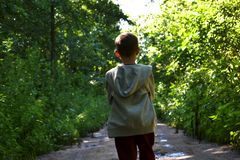 One Little boy in the forest on summer royalty free stock photo