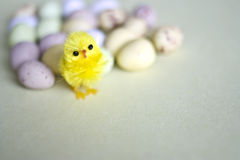 Little easter chick. A tiny easter chick next to small candy eggs Royalty Free Stock Image