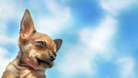 One Little cute puppy. One Little cute puppy of blue sky Royalty Free Stock Photo