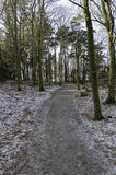 One  little frozen road in the forrest Stock Image