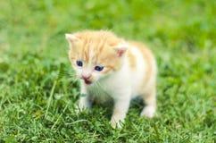 One little kitten outdoor in green grass Stock Photo