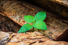 One little plant on the timber Stock Images