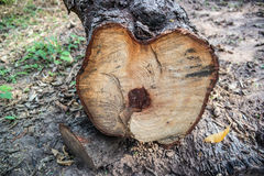 One log closeup compared. Royalty Free Stock Photography