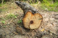 One log closeup compared. Stock Photo