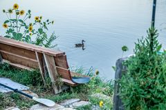 One lone duck venturing out  in a Colorado Lake