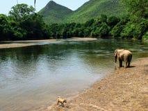 One lone elephant by itself by the Khwae Yai river at the Elephant World sanctuary outside of Kanchanaburi, Thailand. stock photos