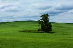 One Lone Tree Royalty Free Stock Photography