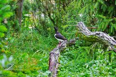 One lonely bird in zoo in germany royalty free stock photo