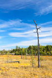 One lonely dry stem of tree Royalty Free Stock Images