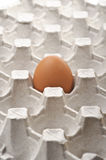 One lonely fresh egg Stock Images