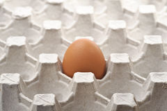 Free One Lonely Fresh Egg Stock Images - 17476334