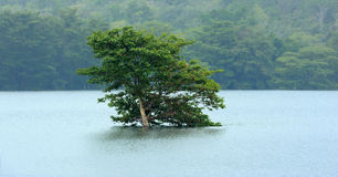 One lonely tree on the banks of a lake Stock Photos