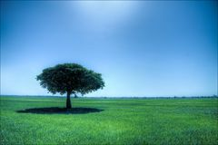 One lonely tree in large green field. Bright Sky stock photography