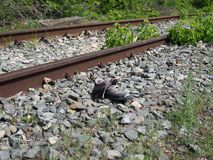 One lost male sneaker lies near the rails on the railway royalty free stock photo