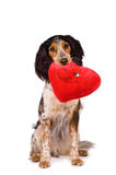 One loving dog. Cute dog holding a winking heart Royalty Free Stock Images