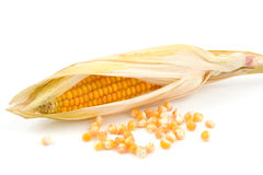 One mais corn Royalty Free Stock Image
