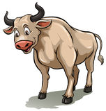 One male cow Stock Photography