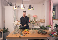 One man florist, arranging flowers, flower shop indoors Stock Photos