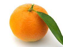 One Mandarin Stock Image